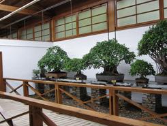 Bonsai-Museum